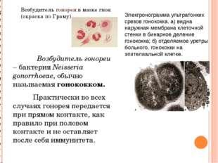Возбудитель гонореи – бактерия Neisseria gonorrhoeae, обычно называемая гоно