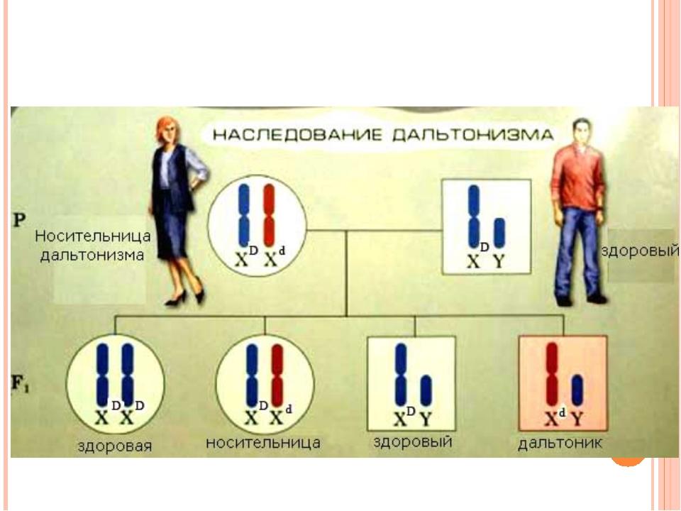 Дальтонизм схема наследования