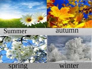 Summer autumn spring winter
