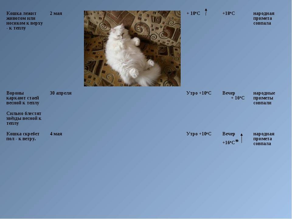 Кошка лежит животом или носиком к верху - к теплу2 мая+ 10оС +18оСнародн...