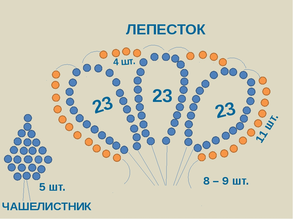 ЛЕПЕСТОК 23 23 23 ЧАШЕЛИСТНИК 5 шт. 8 – 9 шт. 11 шт. 4 шт.
