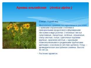 Статус: Редкий вид. Многолетнее травянистое корневищное растение с прямыми оп