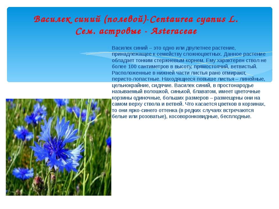 Василек синий (полевой)-Centaurea cyanus L. Сем. астровые - Asteraceae Местоо...