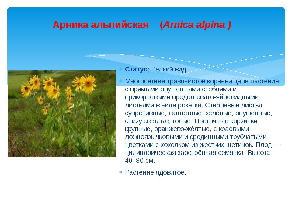 Статус: Редкий вид. Многолетнее травянистое корневищное растение с прямыми оп...