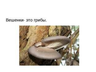 Вешенки- это грибы.