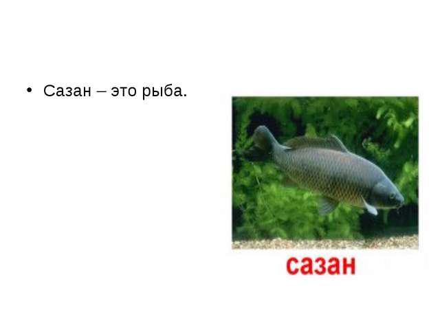 Сазан – это рыба.