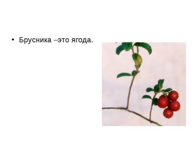 Брусника –это ягода.