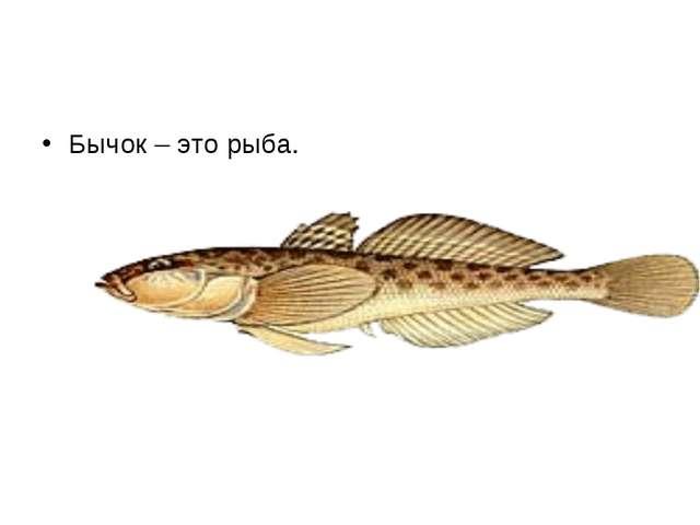 Бычок – это рыба.