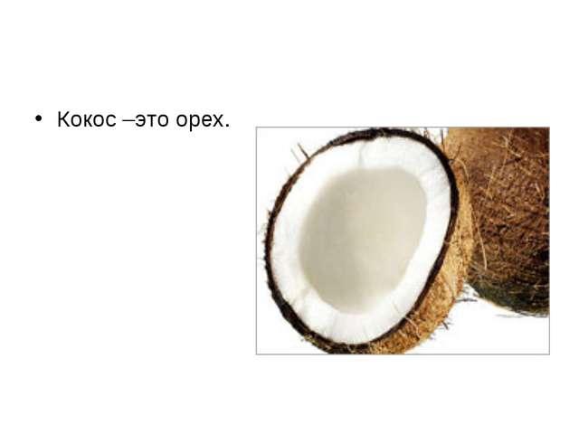 Кокос –это орех.