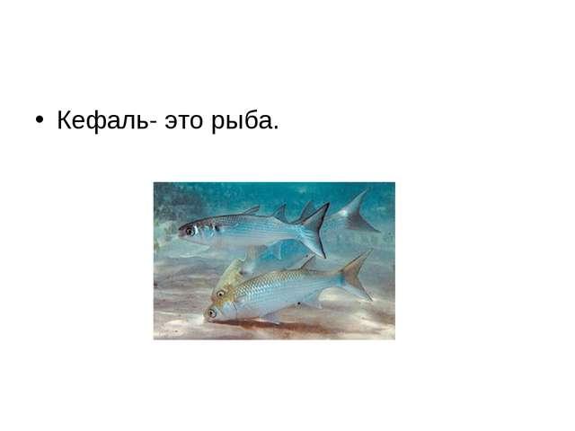Кефаль- это рыба.