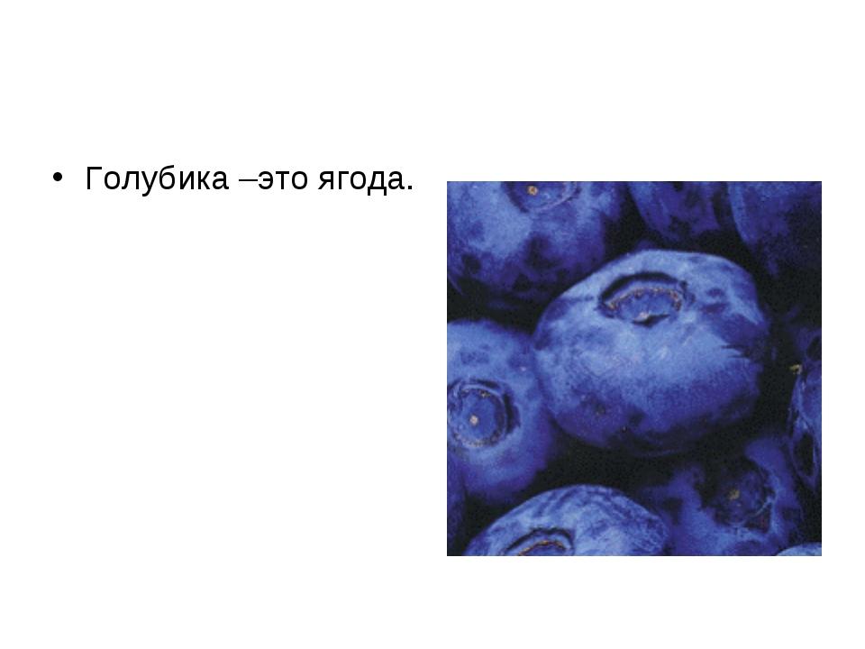 Голубика –это ягода.