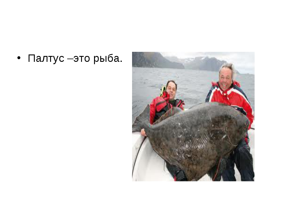 Палтус –это рыба.