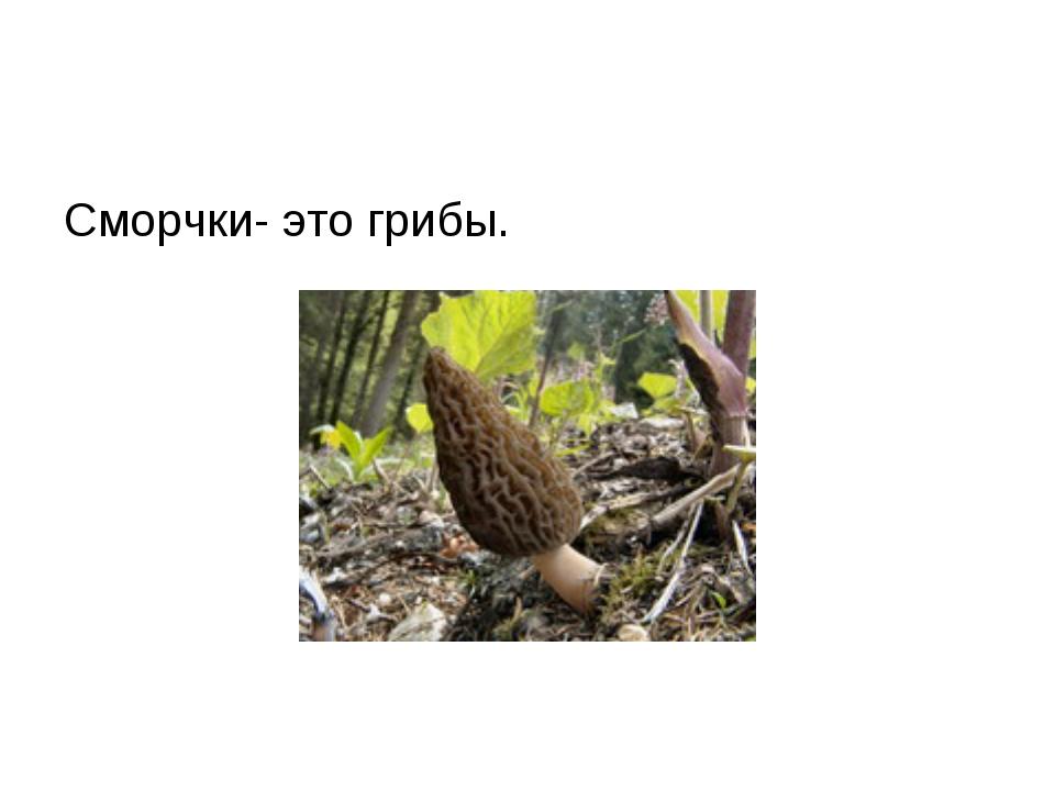 Сморчки- это грибы.