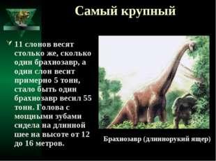 Самый крупный 11 слонов весят столько же, сколько один брахиозавр, а один сло