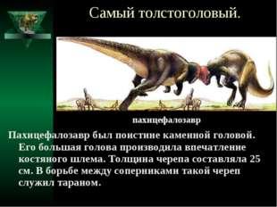 Самый толстоголовый. Пахицефалозавр был поистине каменной головой. Его больша