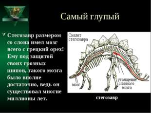 Самый глупый Стегозавр размером со слона имел мозг всего с грецкий орех! Ему