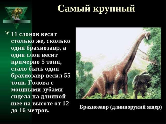 Самый крупный 11 слонов весят столько же, сколько один брахиозавр, а один сло...