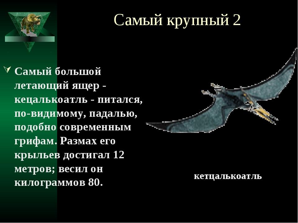 Самый крупный 2 Самый большой летающий ящер - кецалькоатль - питался, по-види...