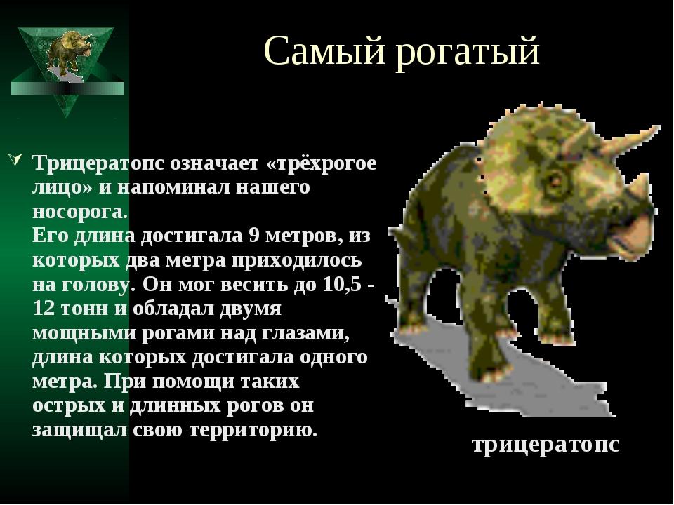 Самый рогатый Трицератопс означает «трёхрогое лицо» и напоминал нашего носоро...