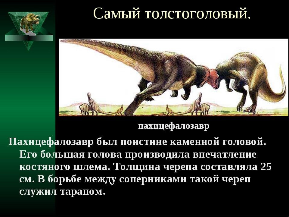 Самый толстоголовый. Пахицефалозавр был поистине каменной головой. Его больша...