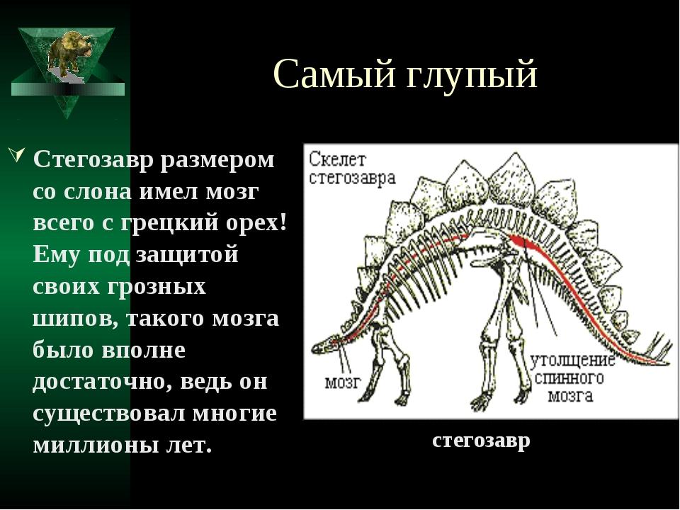 Самый глупый Стегозавр размером со слона имел мозг всего с грецкий орех! Ему...