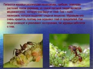 Питаются муравьи различными насекомыми, грибами, семенами растений, соком дер