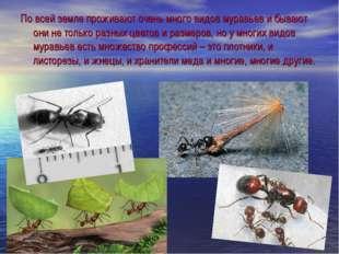 По всей земле проживают очень много видов муравьев и бывают они не только раз