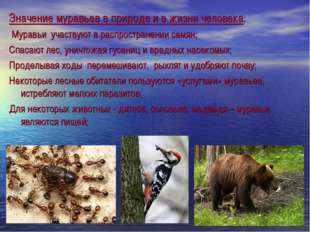 Значение муравьев в природе и в жизни человека: Муравьи участвуют в распростр