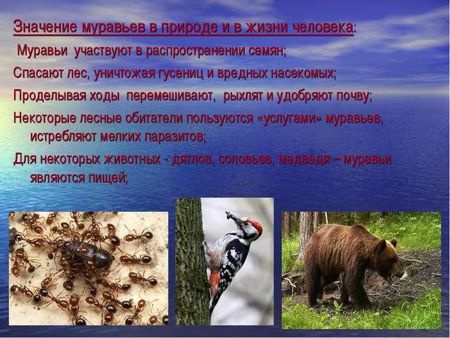 Значение муравьев в природе и в жизни человека: Муравьи участвуют в распростр...