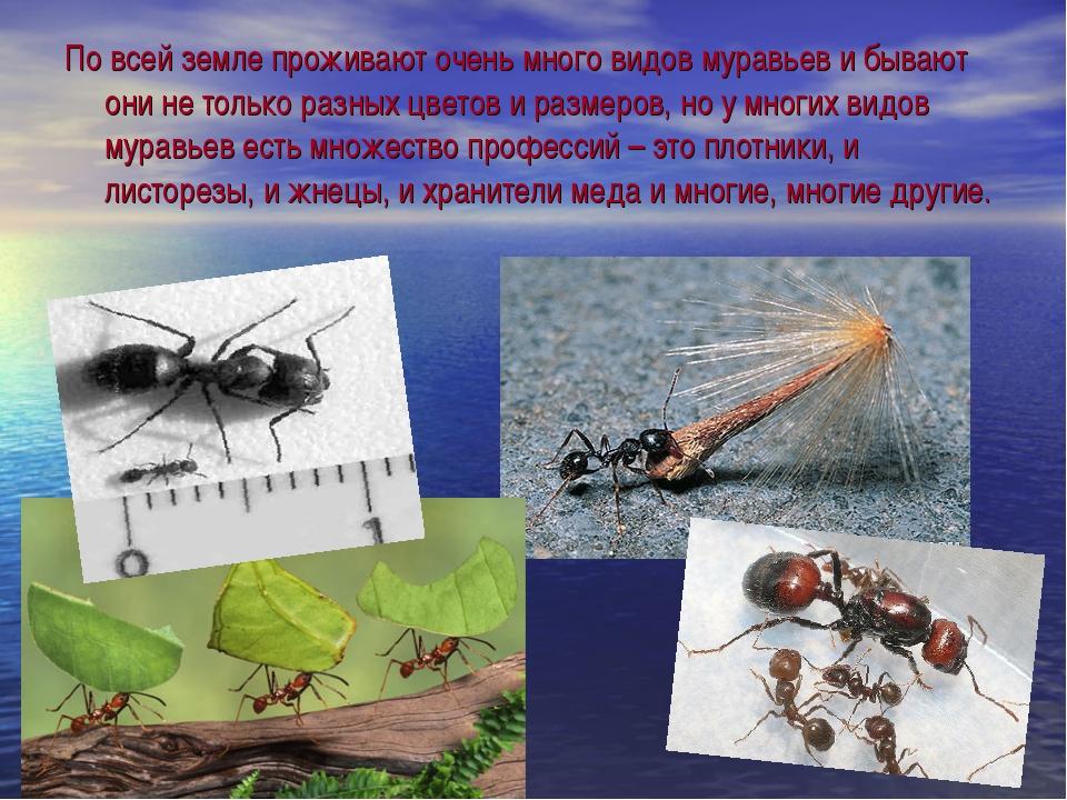 По всей земле проживают очень много видов муравьев и бывают они не только раз...