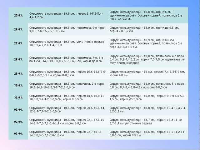 25.03.Окружность луковицы - 19,6 см, перья: 6,9-5,6-5,4-4,4-1,2 смОкружност...