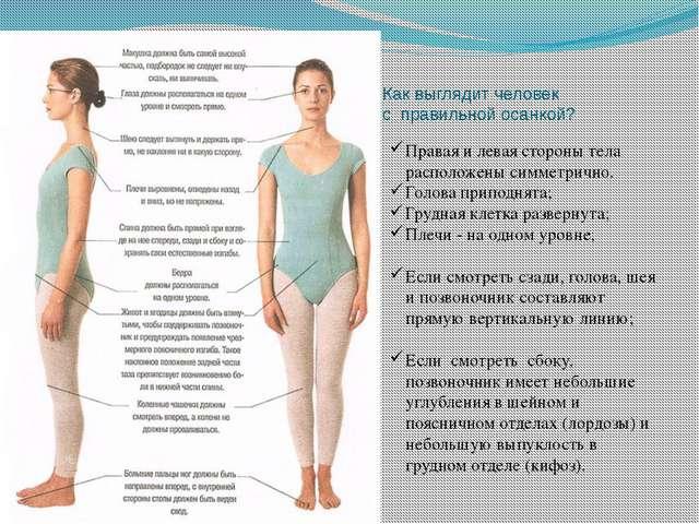 Как выглядит человек с правильной осанкой? Правая и левая стороны тела распол...