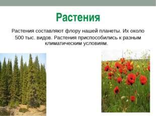 Растения Растения составляют флору нашей планеты. Их около 500 тыс. видов. Ра