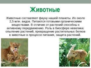 Животные Животные составляют фауну нашей планеты. Их около 2,5 млн. видов. Пи
