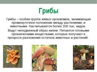 Грибы Грибы – особая группа живых организмов, занимающая промежуточное положе