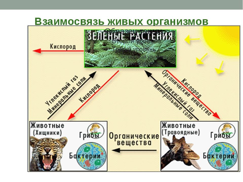 Взаимосвязь живых организмов