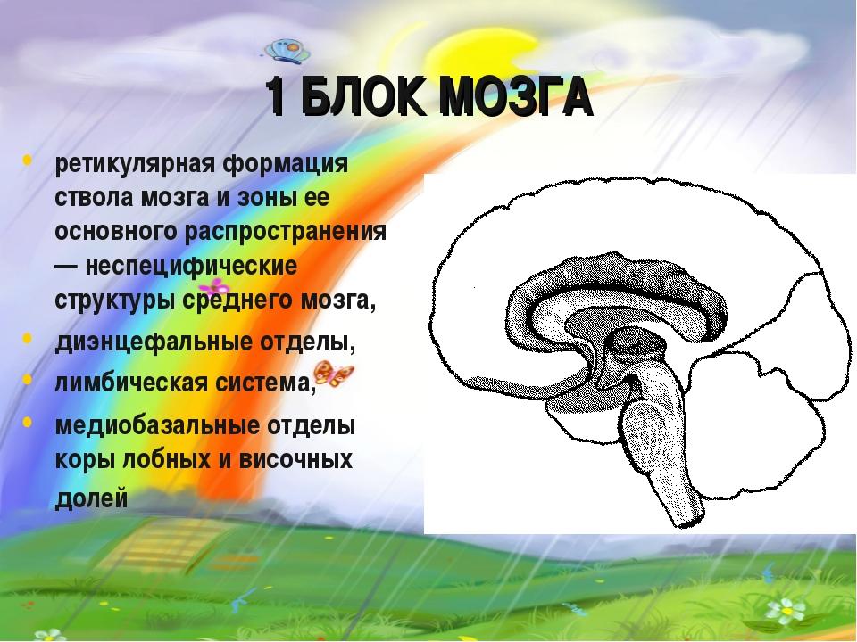 Энергетическая модель мозга