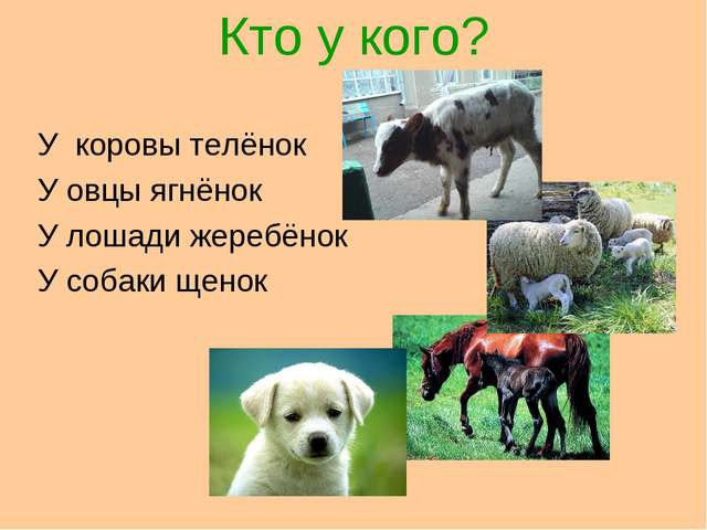 Кто у кого? У коровы телёнок У овцы ягнёнок У лошади жеребёнок У собаки щенок