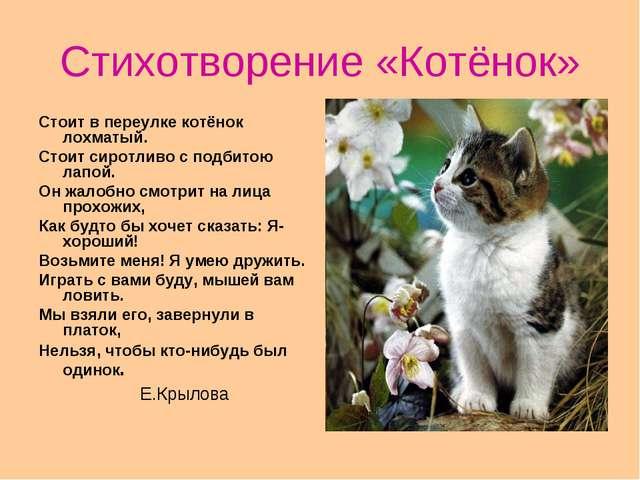 Стихотворение «Котёнок» Стоит в переулке котёнок лохматый. Стоит сиротливо с...