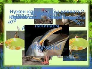 Птичье меню Нет той птицы, чтобы пела да не ела Клювы обычные и непривычные м