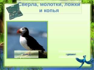 Птица кричит - http://img0.liveinternet.ru/images/attach/c/7/94/287/94287062_