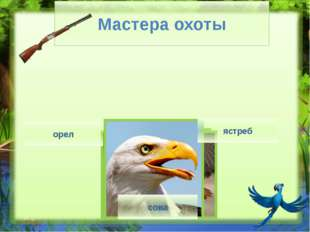 Гриф на скале - http://www.8lap.ru/upload/iblock/a5f/a5fd542bfeec552f1fa44af8