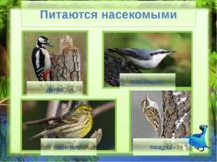 Мастера охоты орел ястреб сова Мастера охоты (Слайд № 14) Следующая остановка
