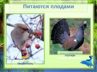 Питаются семенами воробей вьюрок щегол Питаются семенами (Слайд №9) Рассказ
