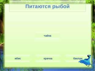 Мастера ныряния гагара баклан пеликан олуш скопа Мастера ныряния (Слайд № 12)