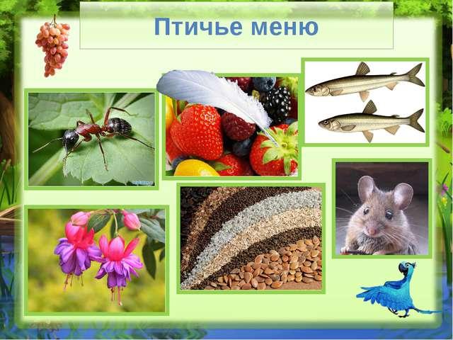 Птичье меню Слайд № 4. У птиц, так же как и у людей есть свои любимые блюда....