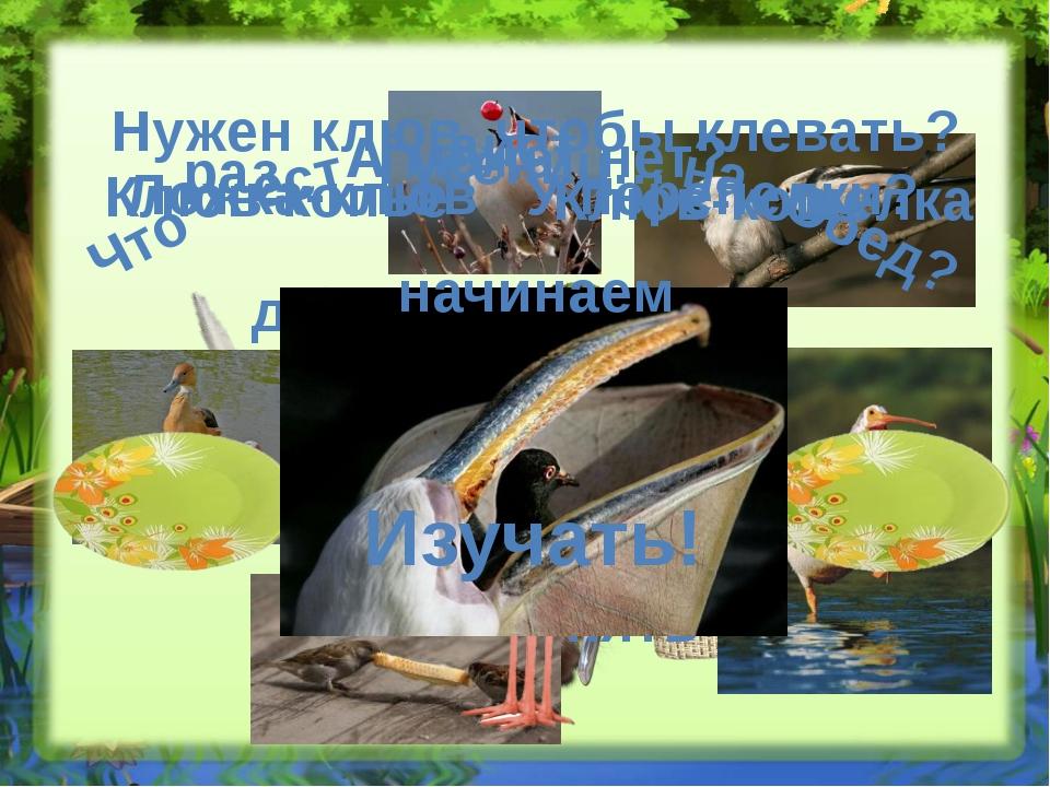 Птичье меню Нет той птицы, чтобы пела да не ела Клювы обычные и непривычные м...