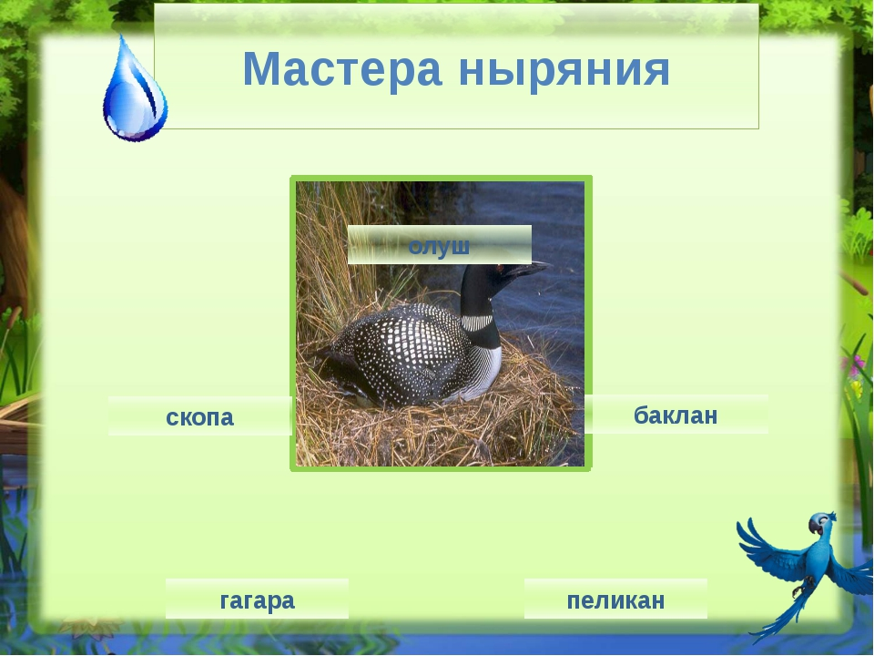 Аист http://img-fotki.yandex.ru/get/5300/160878850.25c/0_7e627_6b560175_XL Пе...