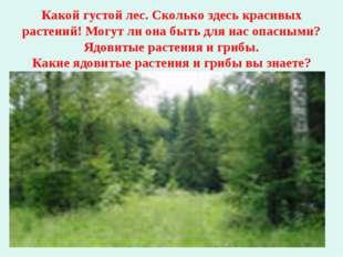 Какой густой лес. Сколько здесь красивых растений! Могут ли она быть для нас