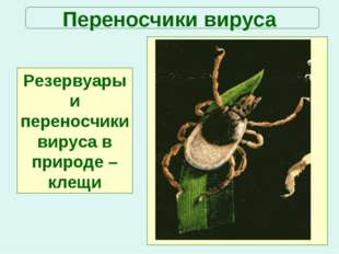Переносчики вируса Резервуары и переносчики вируса в природе –клещи